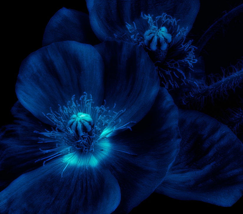 Glowing flowers for Moonlit